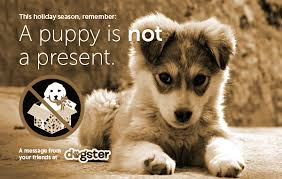 a puppy is not a present