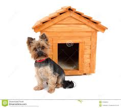 small dog with wooden dog u0027s house stock photo image 31568840