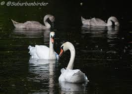the birds of hethersett hethersett birdlife