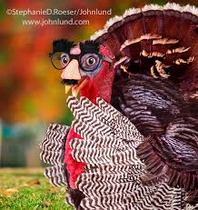 Funny Turkey Videos Thanksgiving A Funny Thanksgiving Turkey Wearing A Groucho Glasses Diguise
