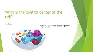 plant and animal cell organelles and their functions ppt video