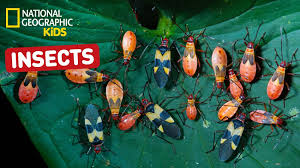 nat geo kids on youtube insects playlist