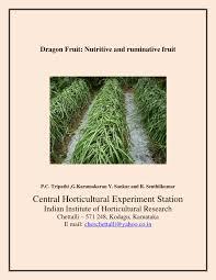 dragon fruit u2013 nutritive and ruminative fruit bulletin pdf