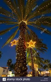 palm tree christmas tree lights inspirational christmas lights palm trees light tree on in pictures
