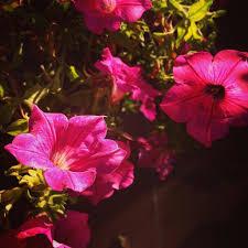 Flowers Plants by Morning Flowers Home Casa Italy Garden Giardino Fiori