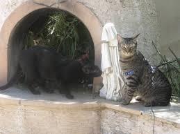 cat patio catbitats