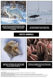 where do polar bears live arctic animals storyboard