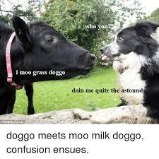 Moo Meme - i moo grass doggo who you blep doin me quite the astound doggo meets