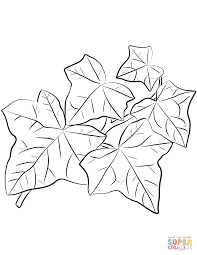common ivy leaves coloring page free printable coloring pages