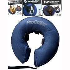 Buster Comfort Collar Best 25 Inflatable Dog Collar Ideas On Pinterest Plastic