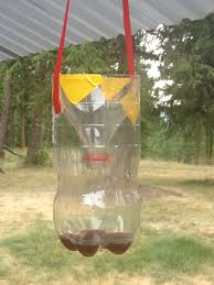 Homemade Fly Trap by Home Made Wasp Traps Mama Bears Garden