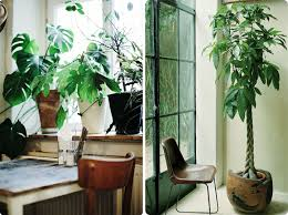 office plant 5 easy and stylish home office ideas u2026 u2013 future and found