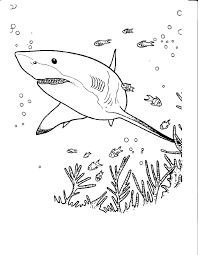 free shark color pages activity shelter
