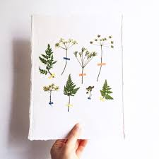 pressed flowers idea to try pressed flowers