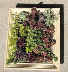 making a hardy succulent picture frame planter