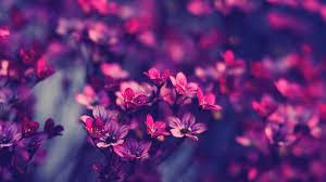 flowers online cheap cheap flowers online wallpaper