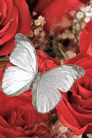 white butterfly roses flowers