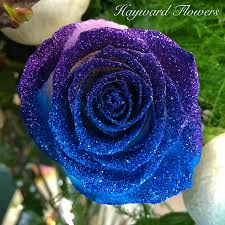 teal roses tip roses 34 royal blue and purple