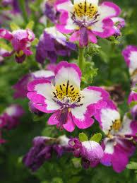 free images blossom petal botany black yellow flora