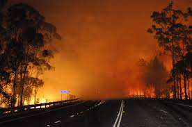Wildfire Honey by Wildfires Rage In Australia Business Insider