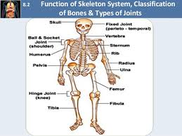 Images Of Human Anatomy And Physiology Chapter 8 Fundamentals Of Anatomy And Physiology