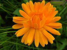 port orange florist index of wallpapers flowers 11 xls