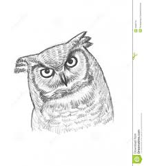 pencil drawings of owls 78 images about owl sketches on pinterest