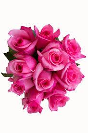 hot pink roses topaz hot pink hot pink roses pink bulk roses