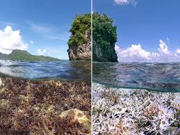 Coral Reef Map Of The World by Coral Reefs Face U0027unprecedented Global Bleaching U0027 For Third Year