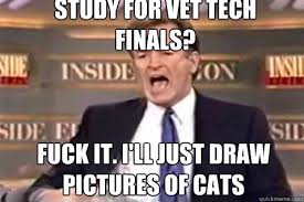 Vet Tech Memes - vet tech school memes memes pics 2018