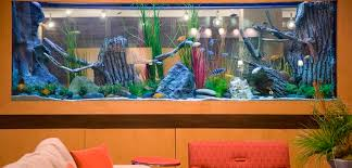 Fish Tank Reception Desk Embassy Suites Houston Energy Corridor Hotel Amenities