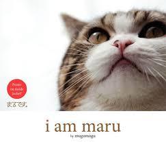 Success Cat Meme - maru the cat know your meme
