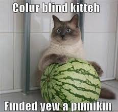 Are Dogs And Cats Color Blind 10 Best Color For The Color Blind Images On Pinterest A Color