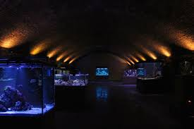 a curios christmas party charterhouse aquatics london designmynight