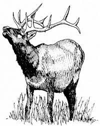 file elk rutting jpg wikimedia commons