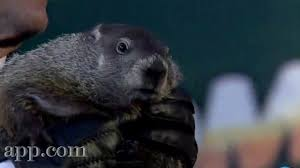 5 awesome facts groundhog