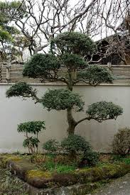 asian ornamental trees landscaping with ornamental trees gallery
