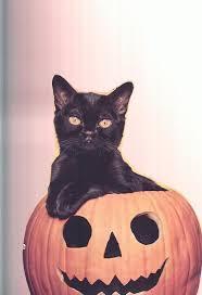 Cat Halloween Costumes Cats 158 U003d U003d Halloween Cats U003d U003d Images Cats