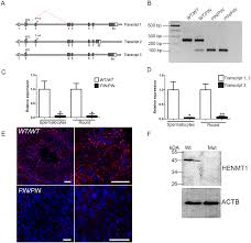 plos genetics henmt1 and pirna stability are required for