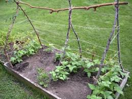 Pvc Pipe Trellis Trellis Your Green Beans 7