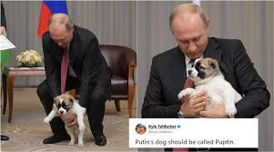 Putin Memes - photos of vladimir putin with puppy gifted by turkmenistan
