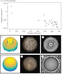 towards a morphological metric of assemblage dynamics in the