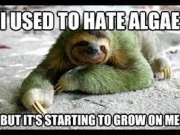 Cute Sloth Meme - funny sloth pictures youtube