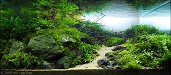 Aquarium Decor Ideas Free Ideas Contemporary Aquascaping Natural Decoration Style