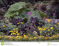 ornamental flowers garden bed stock image image 21239711