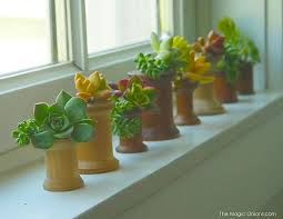 Indoor Gardening Ideas The Indoor Gardening Ideas