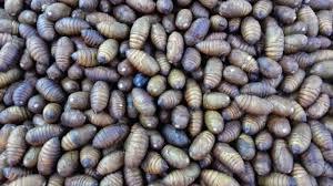 larven in der k che würmer in der küche kucheminimalistisch