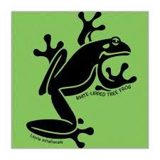 kids t shirt u2013 tree frog bold australia