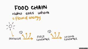 Food Chains Worksheet The Food Chain Video Mit K12 Khan Academy