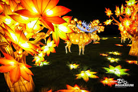 when does the lights at the toledo zoo start toledo zoo luminous nights moose toledo zoo